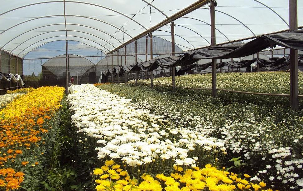 sebrae mercados, cultivo de flores