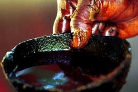 Resíduos do Azeite de dendê viram biocombustível no Pará