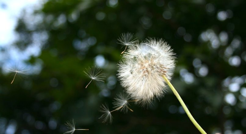 Ideias ao vento não movem uma pluma