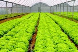 Smartphones e tablets a favor da produção de hortaliças