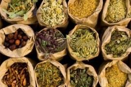 Oportunidade de negócios com ervas medicinais