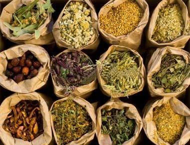 sebrae mercados, ervas medicinais, oportunidade de negócios