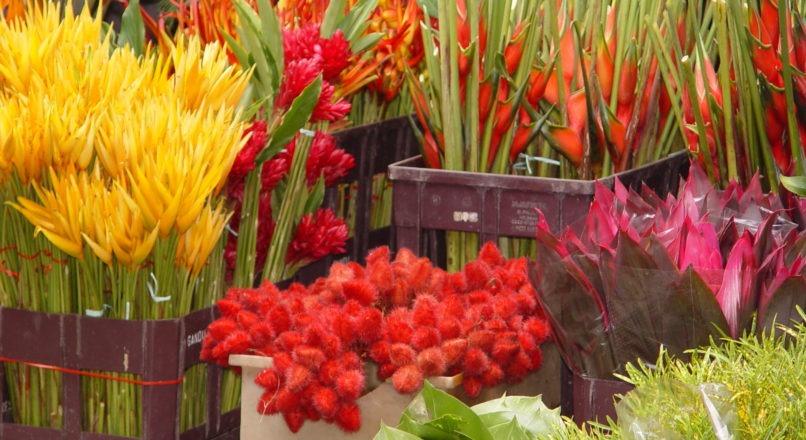 Floricultura no caminho certo