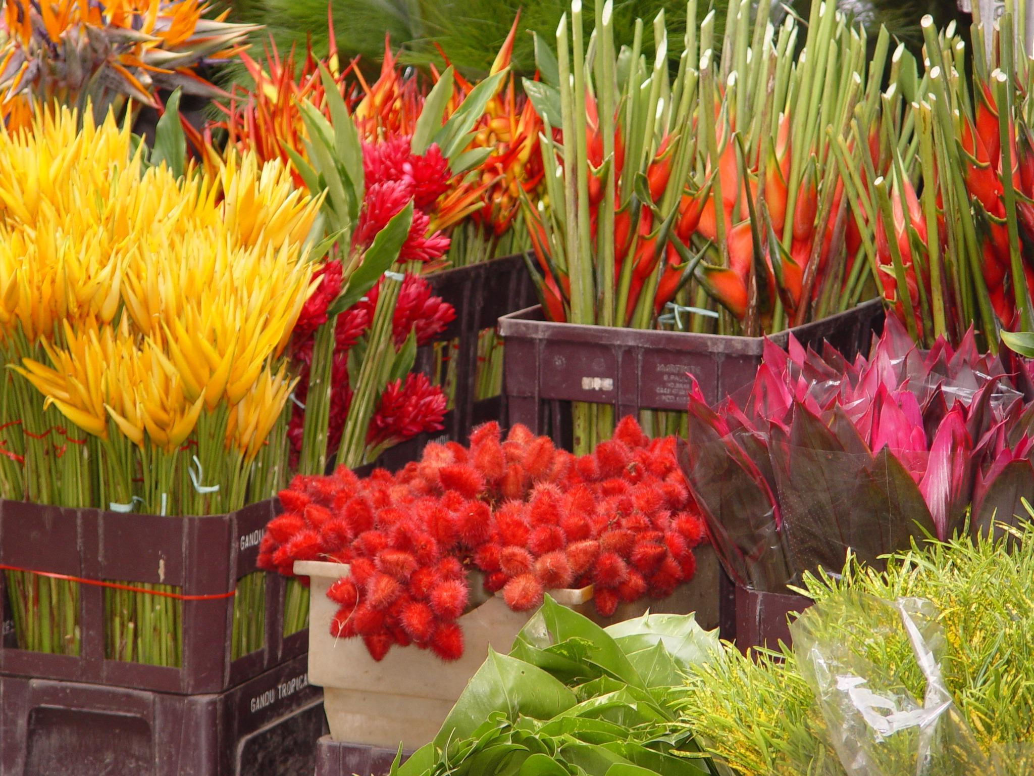 sebrae mercados, floricultura vendas, lucro e resultados