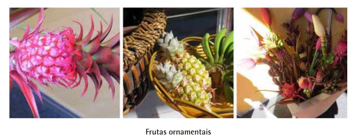 HORTITEC 2014 – A crescente tendência do cultivo de frutas ornamentais.
