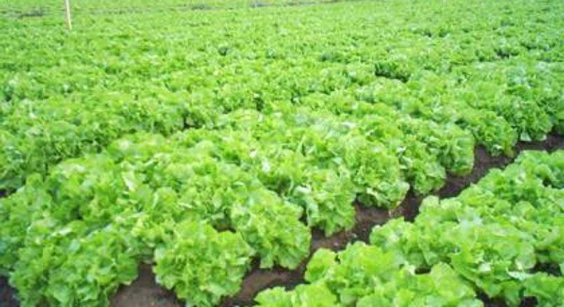 Horticultura – rotação de culturas