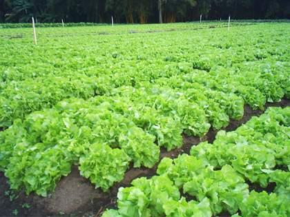 sebrae mercados, horticultura, importância da rotação de culturas