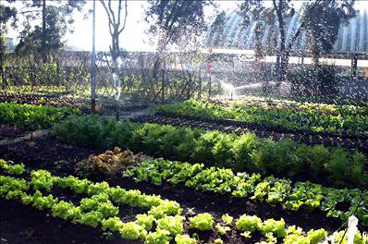 sebrae mercados, horticultura, cuidados com a horta.