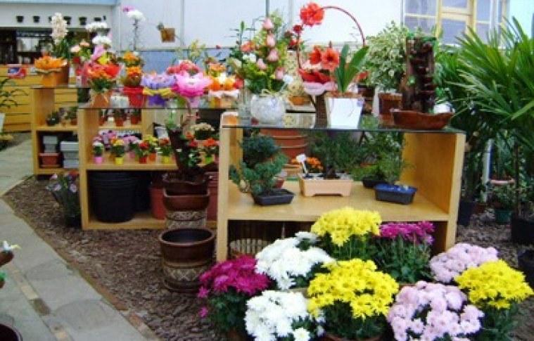 Floricultura – O que considerar num plano de negócios