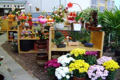 sebrae mercados, floricultura, plano de negócios