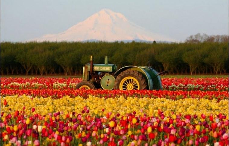 Dicas de automação para cultivo de flores
