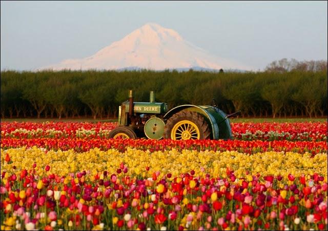sebrae mercados, automação para o cultivo de flores