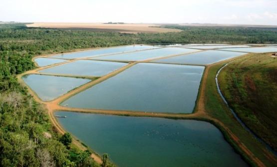 piscicultura, aquicultura, agronegócios, sebrae mercados