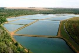 A importância da licença ambiental para a piscicultura