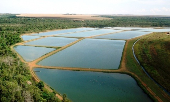 sebrae mercados, licenciamento ambiental na piscicultura