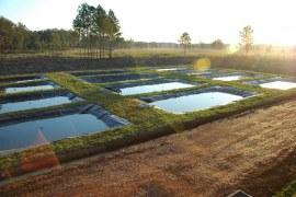 Introdução a piscicultura sustentável