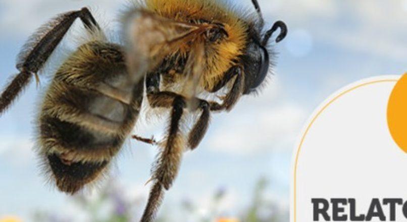 RELATÓRIO INTELIGÊNCIA – O voo de acasalamento da abelha rainha
