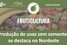[Caso de Sucesso] Fazenda Campodoro se destaca no Nordeste com produção de uvas sem sementes e se prepara para exportar