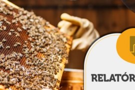 RELATÓRIO INTELIGÊNCIA – Exportação de mel do Brasil