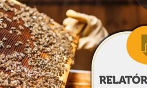 RELATÓRIO INTELIGÊNCIA – Cultura exportadora de mel