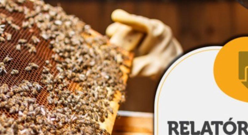 RELATÓRIO INTELIGÊNCIA – Rotulagem do mel orgânico fracionado