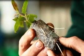 Produção de sementes e mudas florestais