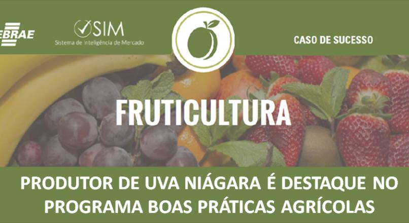 [Caso de Sucesso] – Produtor de uva niágara rosada é destaque no programa boas práticas agrícolas