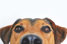 Segmento pet: conheça serviços e produtos diferenciados neste mercado que não para de faturar