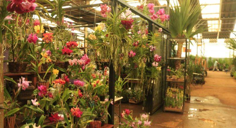 O mercado de flores em tempos de Coronavírus