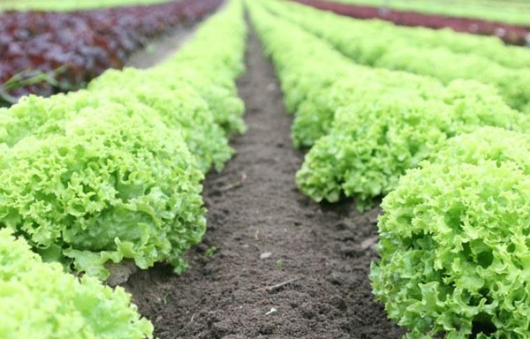Dicas para você cultivar hortaliças em casa