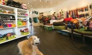 Como Montar Um Pet Shop Com Pouco Dinheiro Em 2020