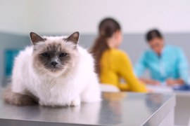 Como melhorar a gestão de uma clínica veterinária?
