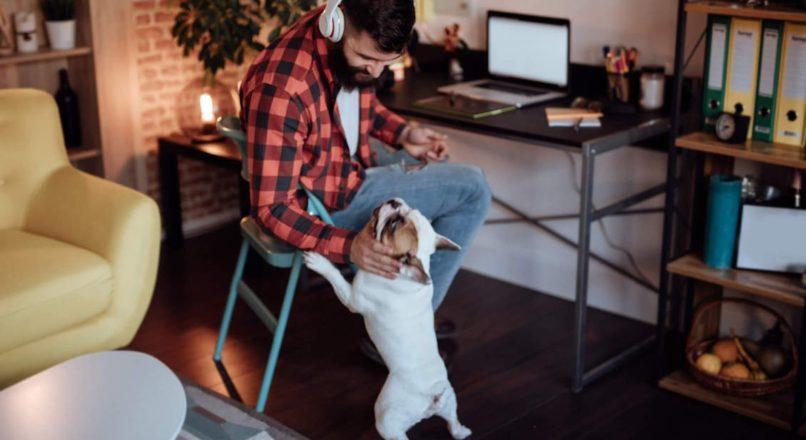 Trabalhos freelancers : Saiba tudo antes de se tornar um !