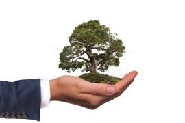 Cupula do clima 2021: 3 ações para contribuir com o meio ambiente.