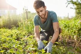 Primeiros passos para um pequeno produtor conseguir financiamentos com atividades Rurais