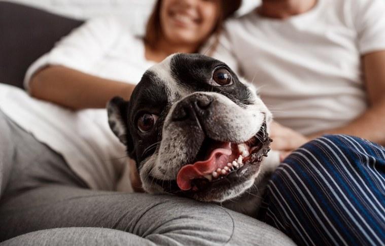 Já pensou em ganhar uma renda extra passeado com cães?