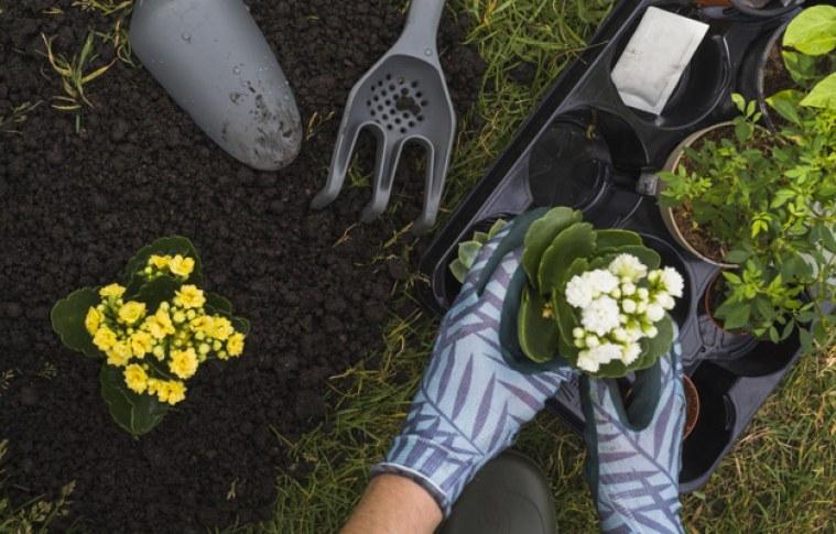 Cultive uma horta orgânica saudável com essas dicas
