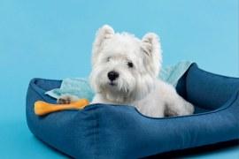 Marketing para Pet Shop: 5 dicas para ter sucesso