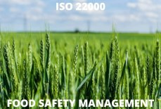 ISO 22000 in Jordan: The ISO Standards You Need to Know